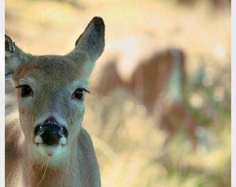 Deer Photo, Woodland Nursery Art, Baby Deer Print, Brown, Beige, Neutral, Green, Nature Photography