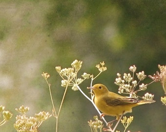 Bird Photography, Yellow, Green, Bird Print, Shabby Chic, Yellow Bird, Warbler, Nature Photography, Woodland