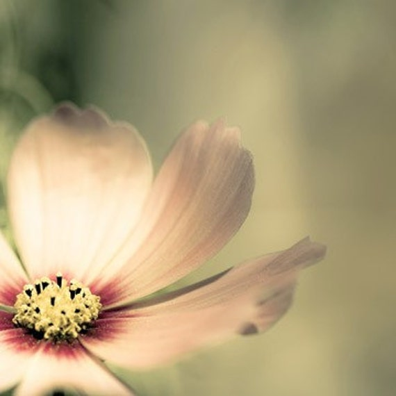 Karma - a pastel pink bloom with delicate petals against a muted green background -  a whimsical photograph - Think PInk - a fine art flower print (8x8)