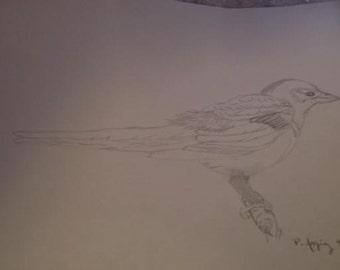 Pencil-Bird