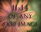 11x14 Photograph of any 8x10 Photo - 11x14 print