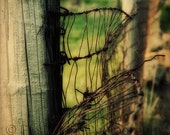 Country Fence Photo - rusty, old, character, green, yellow, field, pasture