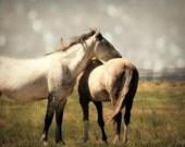 Horse Photograph mustangs animal wild prairie western free