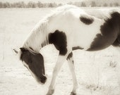 Horse Photography, Horse Art, Horse Home Decor, Wild Mustang Print, Black and White Horse, Sepia Horse Photo, Paint Horse, Pinto Horse, 8x10