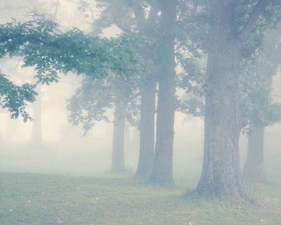 Foggy Tree Photo - early morning, green, summer, warm, dreamy - Through the Mist