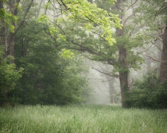 Summer Woodland Photograph - dreamy morning fog calm retreat serene green trees