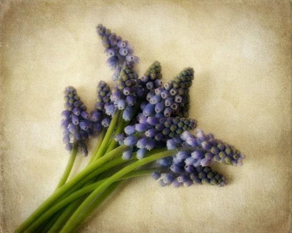 Hyacinth Photo - purple, spring, still life, garden