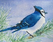 """blue jay watercolor archival print 5"""" x 7"""""""