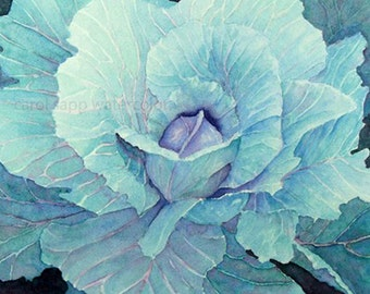 cabbage watercolor painting archival print of watercolor painting