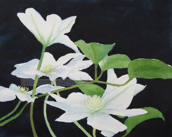 white clematis watercolor print