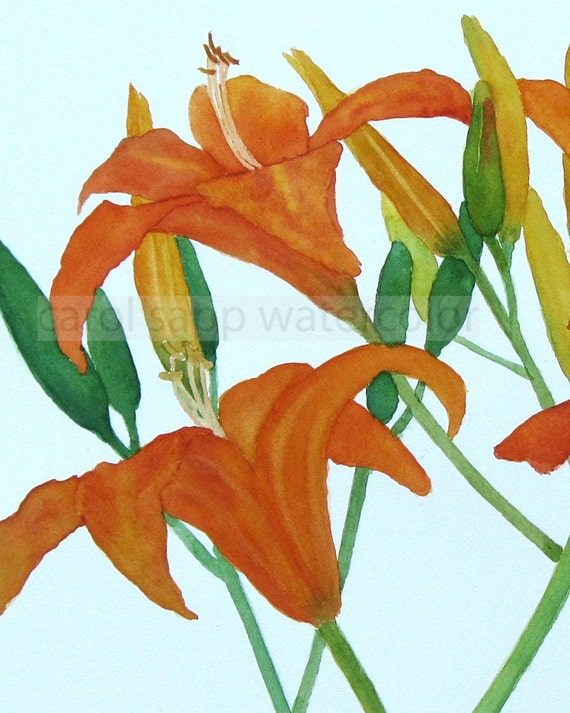 day lily watercolor archival print