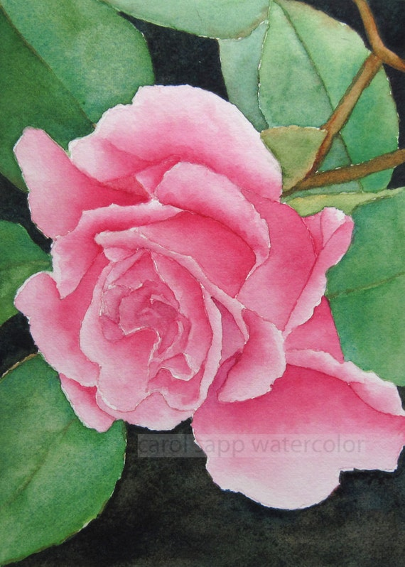 Pink rose watercolor rose archival print of original painting for How to paint a rose in watercolour