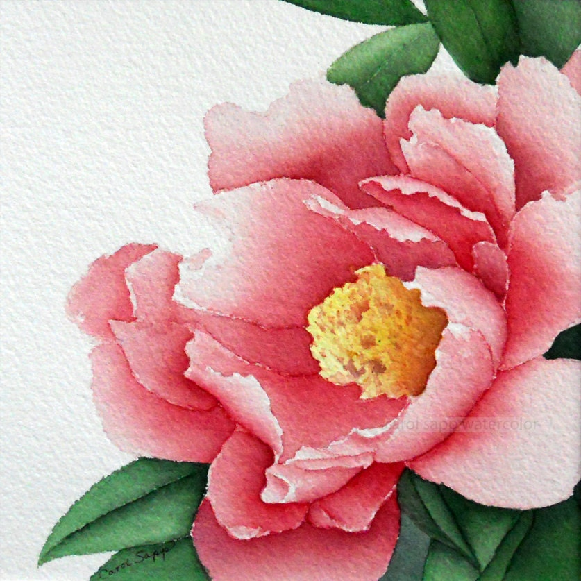 Rose peony watercolor flower painting 12 x 12 by carolsapp for Watercolor painting flowers