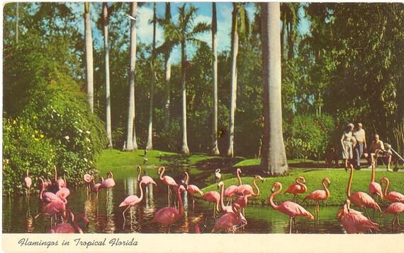 Vintage Florida Postcard Sarasota Jungle Gardens Flamingos