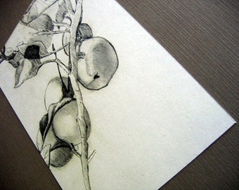 Apple Branch Sketch 5x7 Print