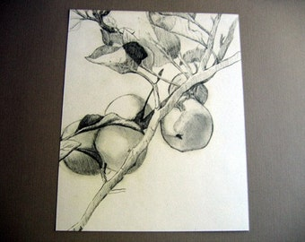 Apple Branch Sketch 8x10 Art Print