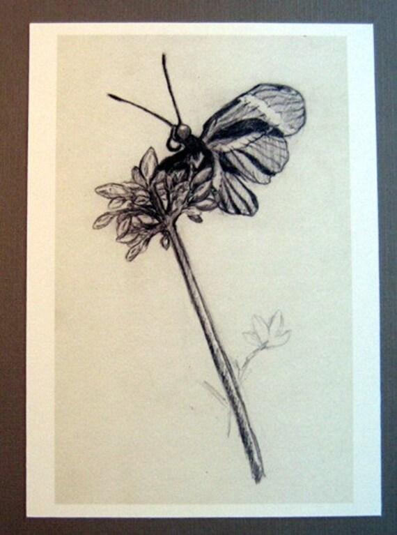 Butterfly Sketch 8x10