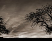 Apple Tree Photograph Panorama Sepia Silhouette Dramatic Sunrise 11x30 Photograph - rrobertsphoto
