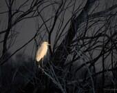 Bird Photograph Great Egret Sunrise Dead Tamarisk Salt Cedar Dark 9x14 Photograph