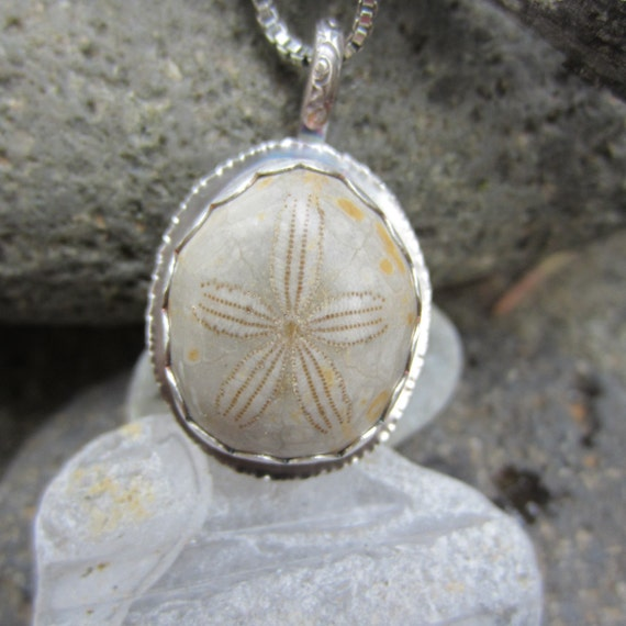 Rustic Ocean Relic Fossilized Sand Dollar Necklace