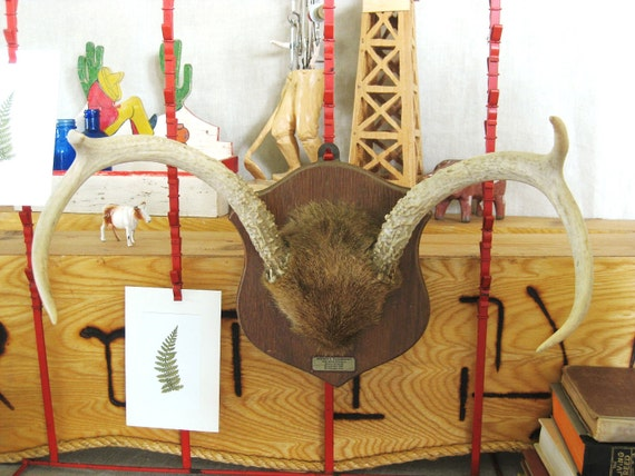 Vintage Antler Mount - Ranch Cabin