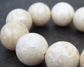 Fossil Beads 10mm Natural White Smooth Round Stones - 12 Pieces