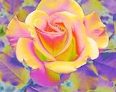 Autumn Rose 9 x 5 print