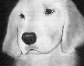 Pet Portrait Artistically Drawn from Your Photo 8 x 10