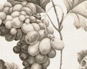 Vintage Grapes fabric sample in taupe on cotton