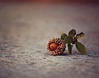 Acorn - Nature Photography - Israel Photography - Christian Church - Fall Winter Art - Travel Photography