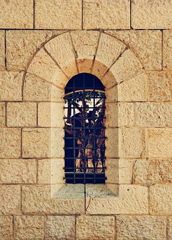 Israel Travel Photography - Tabgha Christian Holy Site - Jerusalem Stone - Ancient Tree - Arch and Olive - Fine Art Photograph