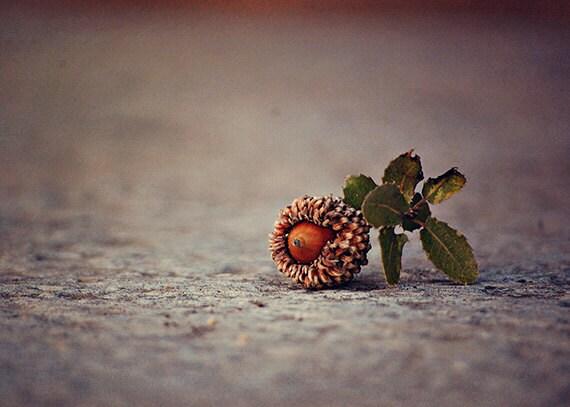 Acorn - Nature Photography - Israel Photography - Christian Church - Fall Winter Art - Travel Photography