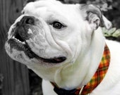 Pumpkin Patch Plaid Autumn Dog Collar