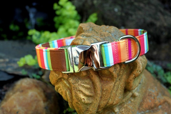 Tropical Multi Colored Stripes Dog Collar