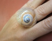 Lined Moon Shell Ring