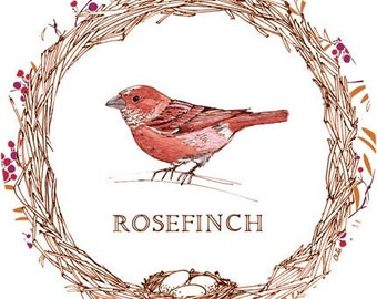 Cheerful 8x8 Digital Illustration Print of a Rosefinch