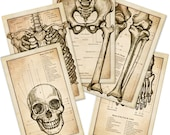 Antique Style Skeletal Anatomy Set - Original Illustration
