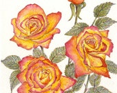 Matted Fine Art Print - Watercolor Painting - Tawny's Rose - 8 x 10