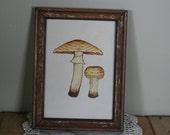 vintage mushroom art