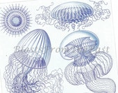 ERNST HAECKEL print 'Aequorea' and 'Farrea'  35-36, Beautifully Illustrated, Perfect for Framing, Oceanography, Victorian