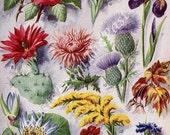 1924 NATIONAL FLOWERS Print, Roses, Shamrock, Lillies, Fleur-de-lis, Cactus, Thistle, Perfect for Framing, Colorful, Iris, Lotus