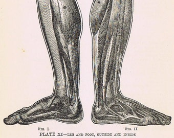 1919 Authentic HUMAN ANATOMY antique print,  Plate XI  'Leg and Foot, Outisde and Inside', Perfect for Framing or Art Project, Doctor, Nurse