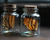 Butterfly Wing necklace - natural history, jar, specimen, modern