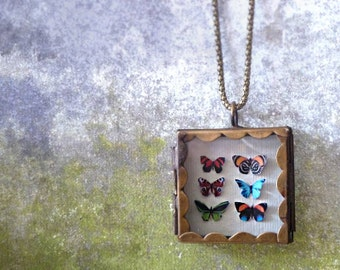 Butterfly Shadowbox Collection Locket Necklace. Natural History. Butterfly Jewelry