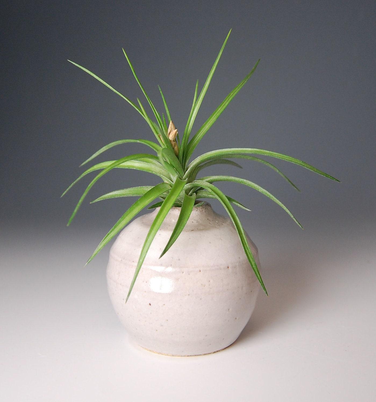 Bud vase with air plant flower vase stocking by sawyerceramics for Air vase