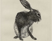 Bob the Hare - reserved