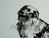 dog smiling watercolor painting