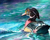 Androscoggin Wood Duck - Open edition print of an original watercolor (fits 11x14 frame)