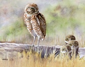 Burrowing Owl Family - Open edition print of an original watercolor (fits 11x14 frame)