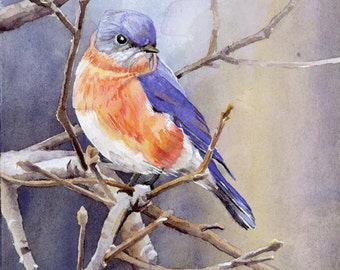 Eastern Bluebird No. 2 - Open edition print of an original watercolor (fits 11x14 frame)